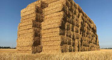 Matières premières agricoles