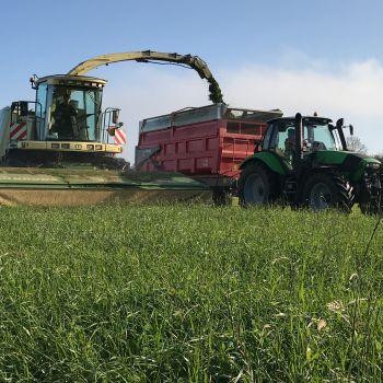 Ensilage en coupe directe : Céréales immatures, méteils, prairies naturelles ou temporaires