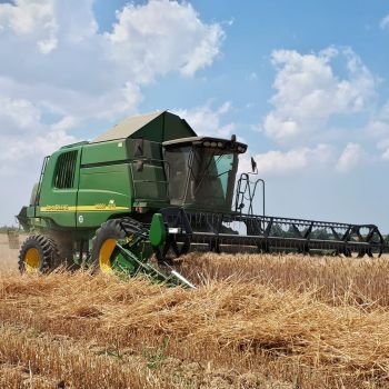 Moisson de blé avec machine conventionelle