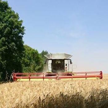 Récolte blé Lexion 770 18350 Tendron